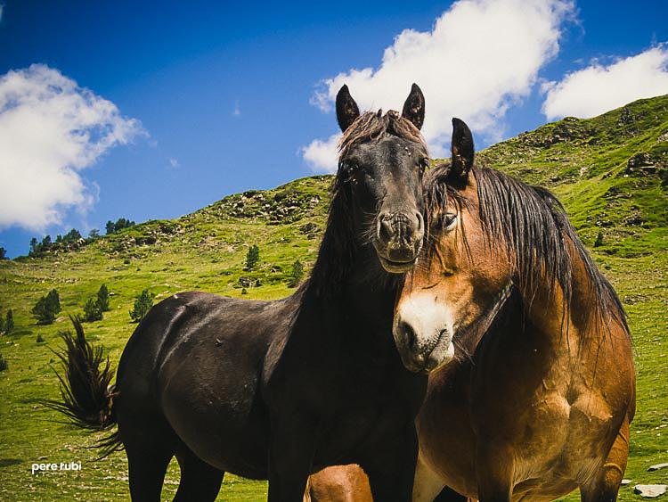 Pere_Rubi_Lo_Pallars_2014