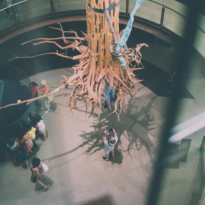 Pere Rubi Museu Ciencia